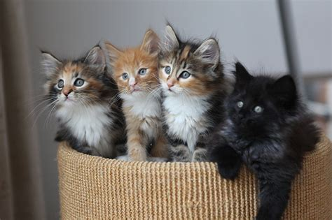 Have A Kindle of Kittens, and 10 Other Hilarious Names for